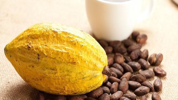 Cacao - món quà của tự nhiên