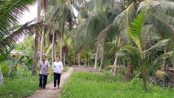 Bình Đại (Bến Tre) mở rộng 106ha vườn dừa