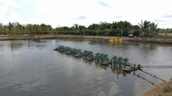 Bến Tre: Sẽ đầu tư trên 2.500 tỷ đồng phát triển đối tượng thủy sản nuôi chủ lực