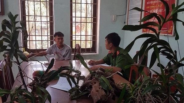 TP Quy Nhơn: Tuần tra đêm bắt đối tượng trộm cây cảnh