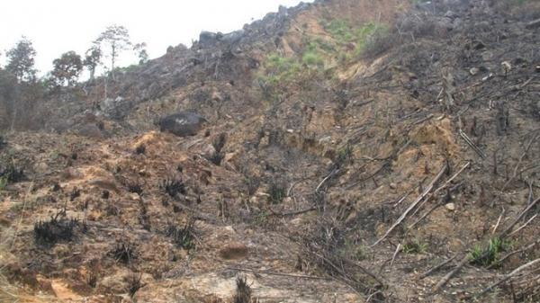 Thực hư vụ phá rừng giáp ranh Bình Định - Phú Yên!