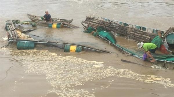 TX An Nhơn: Nước sông dâng cao, 1 nông dân bị trôi 4 tấn cá lồng, thiệt hại gần 260 triệu đồng