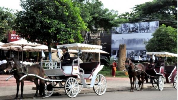 Bình Định: Nét mới dịch vụ du lịch bằng xe ngựa kéo