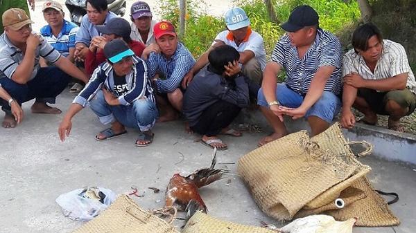 Đồng Nai: Bắt hàng chục đối tượng đang đá gà giữa rừng tràm