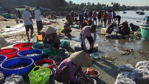 Bình Thuận: Chợ hải sản tính tiền theo thau