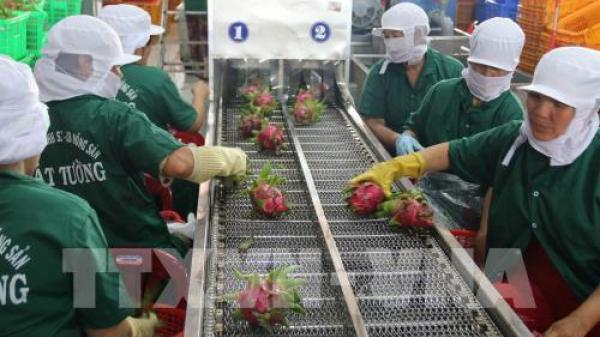 Long An:Giải pháp nào để phát triển bền vững cây ăn quả?