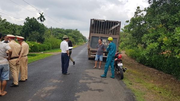 Bình Phước: Bắt 2 xe tải chở hàng chục con heo vào vùng dịch tả lợn Châu Phi