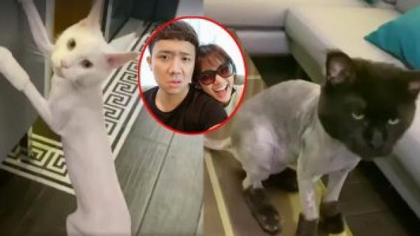 Khoe hai chú mèo cưng, Trấn Thành tiếp tục hỏi tội vợ khi cạo hết lông
