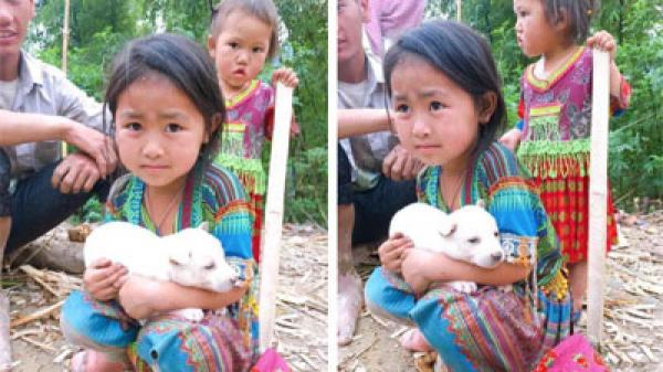 Đằng sau bức ảnh bé gái vùng cao buồn bã ôm rịt lấy chú chó nhỏ xin khách đừng mua: Giống chó Mông đuôi cộc quý hiếm, quấn chủ và cực kỳ trung thành