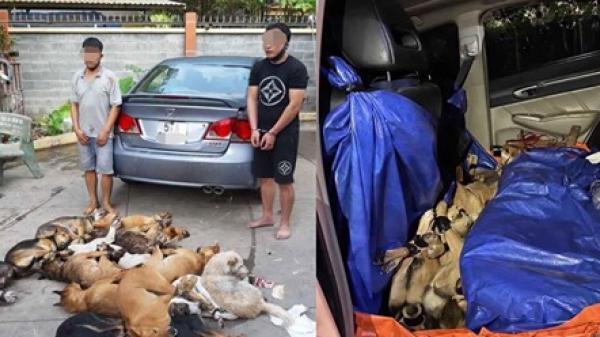 Hai đối tượng đi ôtô dùng súng điện trộm 14 con chó trong đêm