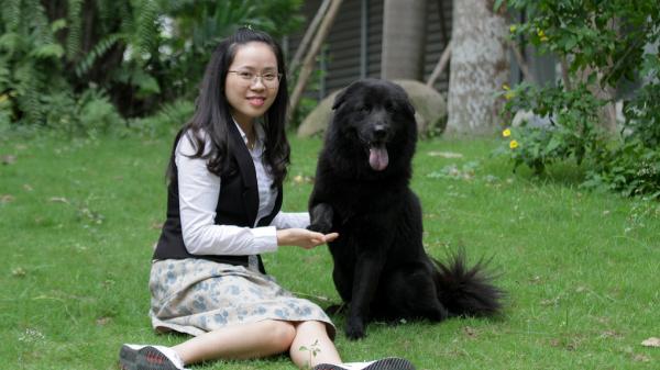 Chú chó được ví như 'ngao Tạng' Việt Nam