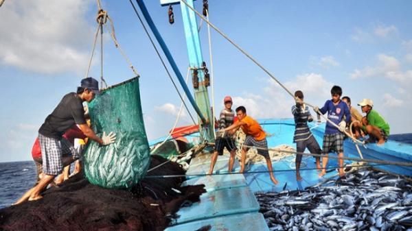 Bình Thuận ngăn chặn triệt để khai thác hải sản trái phép