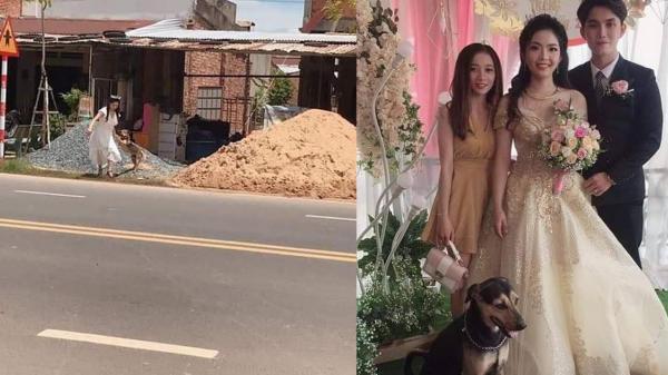 Cô dâu vội vã chạy sang đường để lôi chó cưng về nhà chụp cùng trong đám cưới