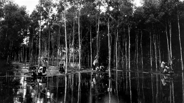 Lung Ngọc Hoàng giữa vùng đất huyền thoại U Minh