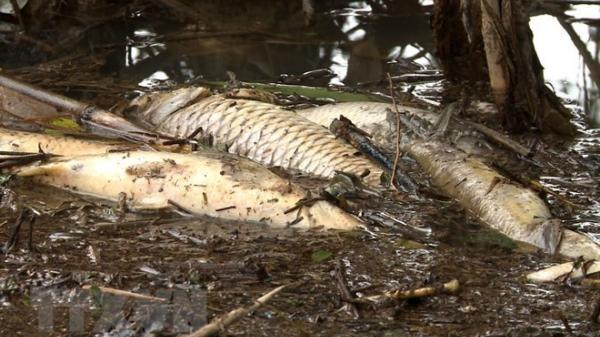 Làm rõ nguyên nhân khiến cá chết trên các sông tại Cà Mau