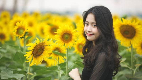 Cánh đồng hoa hướng dương rộng lớn, hút giới trẻ Sài Gòn check-in