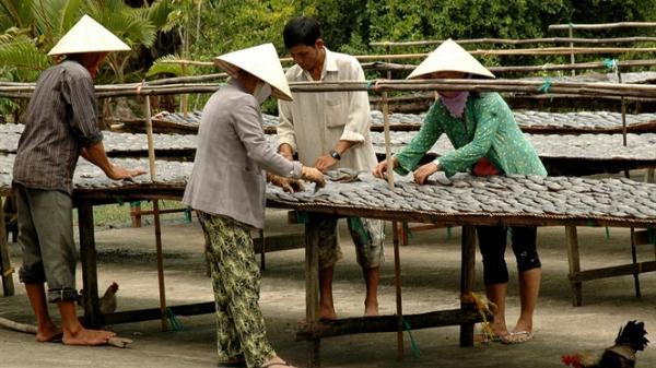 Làng cá khô bổi truyền thống Trần Văn Thời (Cà Mau) nhộn nhịp vào vụ Tết