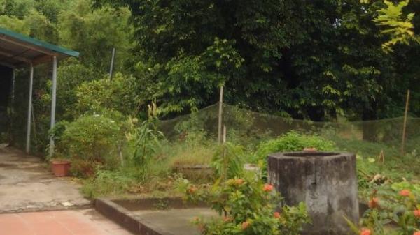 Hạ Hòa (Phú Thọ): Giải mã vụ việc những cái c.hết bí ẩn ở đồi Cây Thị