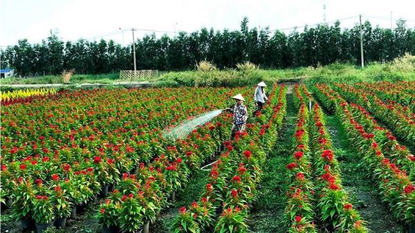 Làng hoa lớn nhất Sài Gòn tất bật vào mùa đón Tết