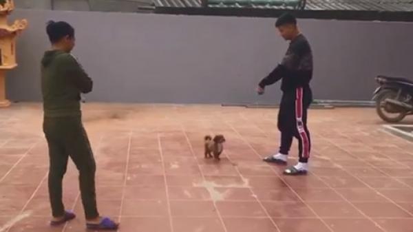 Clip hài thầy Park Hang Seo, Đức Chinh chơi đùa bên cún cưng