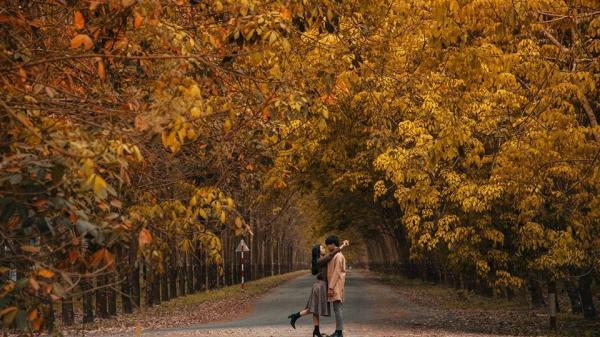 Cách Sài Gòn không xa có một khu rừng cao su lá vàng đẹp như Hàn Quốc, giới trẻ đang đua nhau check in rần rần