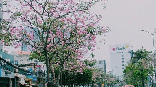 Không cần đi đâu xa, ở Sài Gòn có một đường hoa đặc biệt mỗi năm nở 1 lần