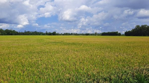 Đồng Tháp được phép chuyển 31,41 ha đất trồng lúa sang đất phi nông nghiệp