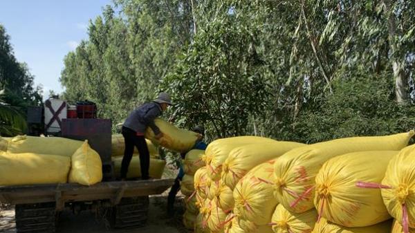 Đồng Tháp hỗ trợ tiêu thụ hơn 37 nghìn tấn nông sản cho dân