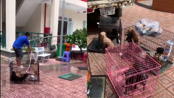 """Người phụ nữ thành F0, chính quyền Biên Hoà đón 12 chú chó về chăm: """"Gia đình rất biết ơn"""""""