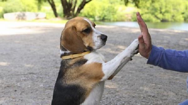 """""""Ngôi trường"""" kì lạ ở miền Tây: Khi chó cũng... đi học như người"""