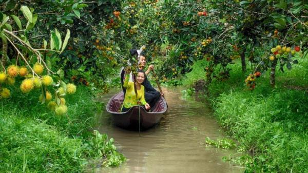 Dạo chợ nổi Phong Điền nghe tài tử, nếm ẩm thực dân dã