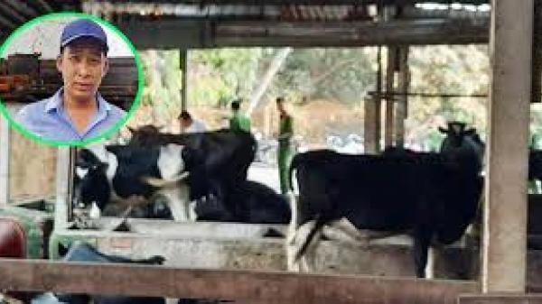 Vụ ở sòng bạc Củ Chi: Chủ con bò bị Tuấn 'khỉ' ɓắռ c.h.ế.t đòi bồi thường 40 triệu