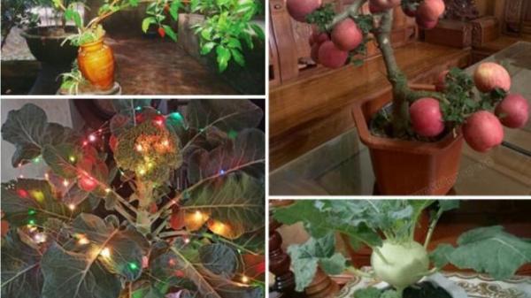 """Chán đào quất, dân tình """"rần rần"""" khoe dàn bonsai trưng Tết chất lừ, ai nhìn cũng cười lăn"""