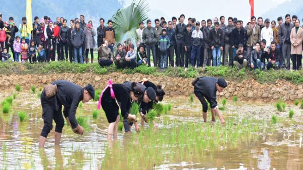 Độc đáo với kinh nghiệm sản xuất nông nghiệp qua tục ngữ người dân tộc Tày