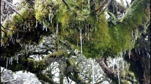 Băng giá phủ trắng đỉnh núi Phia Oắc ở tỉnh Cao Bằng