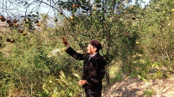 """Cao Bằng: Chuyện người """"biến"""" đất cằn cho những mùa quả ngọt"""