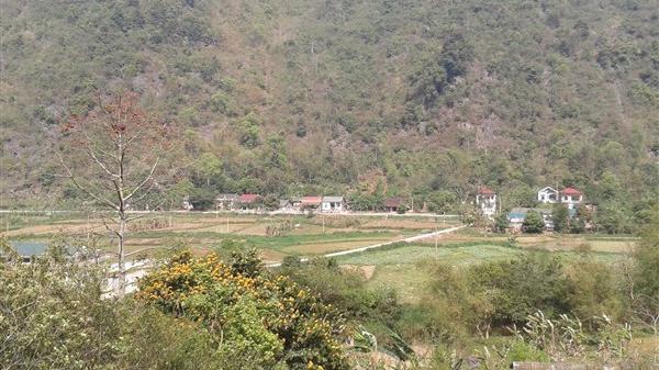 Ở Cao Bằng có 1 nơi hương thơm thanh khiết gọi mùa xuân về