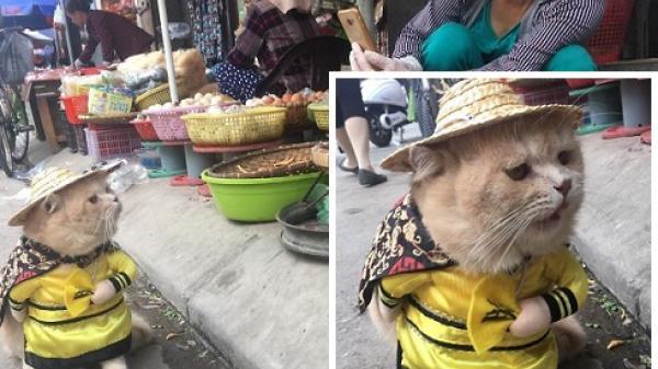 Hết bán cá lại trông phản thịt, chú mèo Việt nổi tiếng lên trang nhất tạp chí nước ngoài