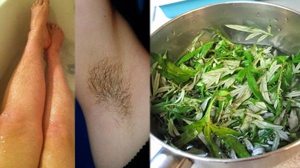 Luộc nhừ 1 nắm ngải cứu rồi làm theo cách này, lông nách, lông tay/chân cả cụm cũng tự rụng sạch không còn 1 cọng sau 15 phút
