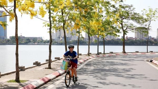Hoa muồng hoàng yến nhuộm vàng con đường ven hồ Hà Nội