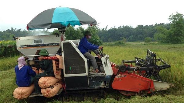Cao Bằng: sôi động dịch vụ mùa gặt