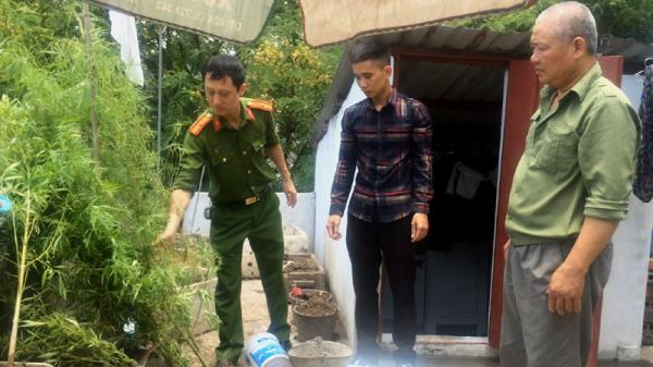 Quảng Ninh: Bố tàng trữ ma tuý, con trai trồng cần sa trên mái nhà để sử dụng