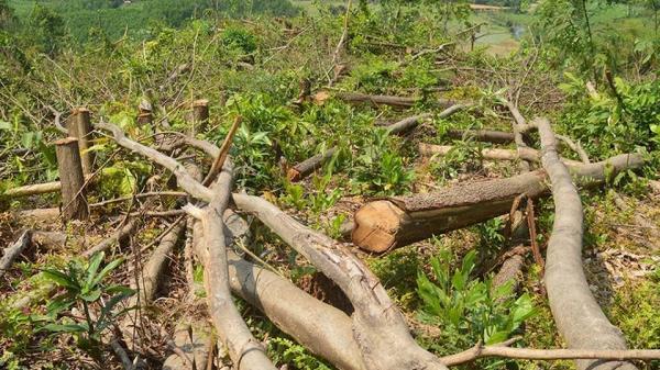 Lạng Sơn: Khởi tố hàng chục đối tượng phá rừng phòng hộ