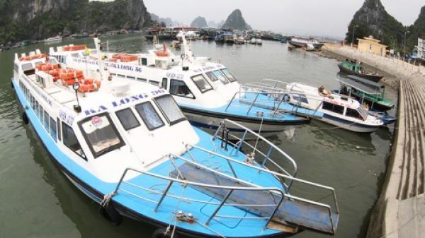 Quảng Ninh: Dừng cấp phép tàu ra đảo Cô Tô