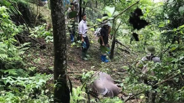 Hà Giang: Xót xa 8 con trâu bị sét đánh chết