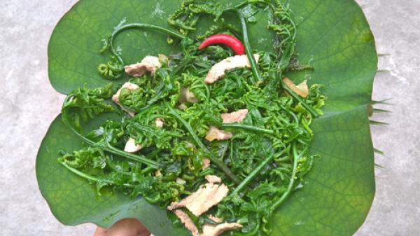 Hương vị núi rừng đậm đà trong món rau dớn