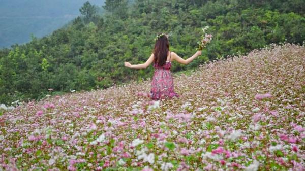 """Ngay ở Cao Bằng có thung lũng hoa tam giác mạch đẹp """"RỤNG TIM"""" đang nở rộ nhất định phải đi dịp Tết này"""