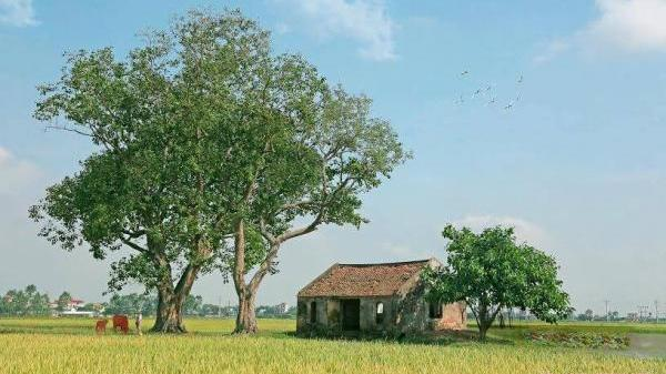 Quán làng hàng trăm năm tuổi rêu phong qua 4 mùa Xuân, Hạ, Thu, Đông gợi bao nỗi nhớ...