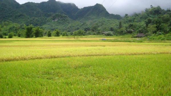 Khám phá lễ mừng lúa mới của người Tày, Nùng ở Cao Bằng