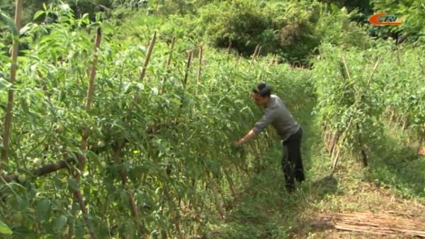 Chàng trai trẻ người Cao Bằng đam mê nông nghiệp, làm giàu ngay tại mảnh đất quê hương